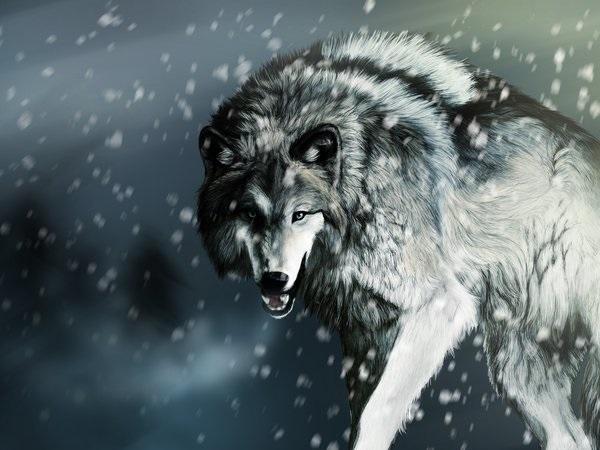 Картинки на заставку волк   подборка016