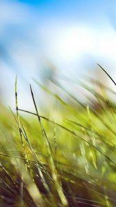 Картинки на летнюю тематику   красивая подборка017