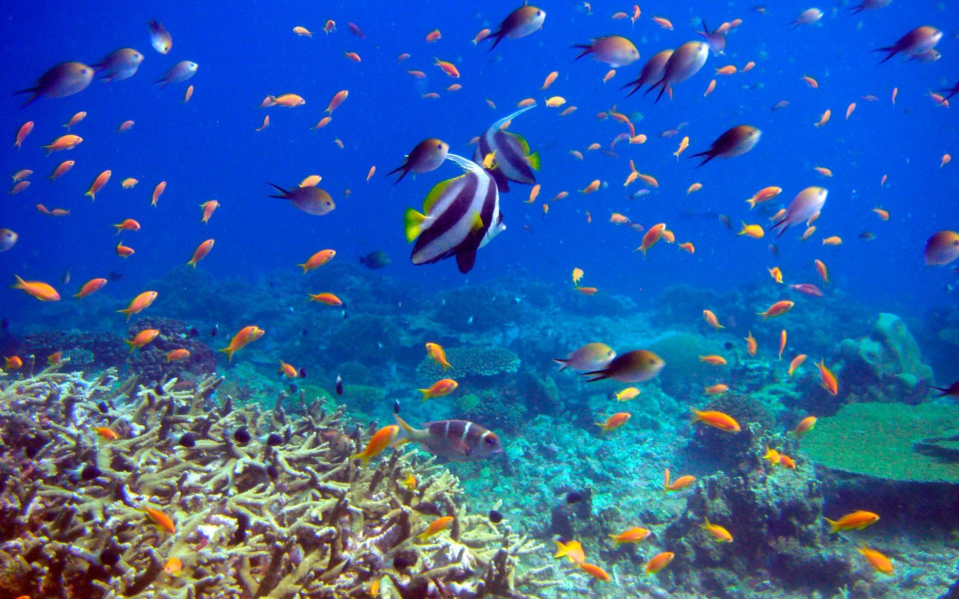 пошло фото подводного мира долларов
