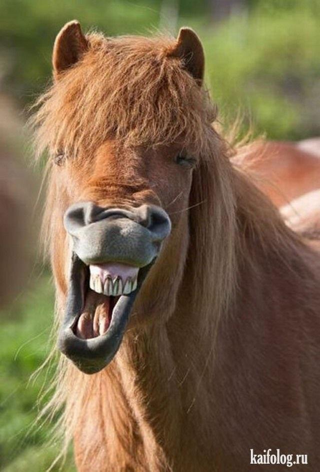 Картинки приколы с лошадьми   красивая подборка022