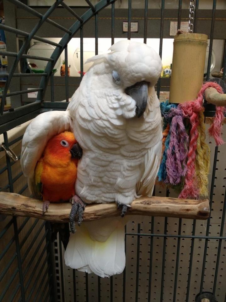 Поздравления юбилеем, попугай прикол картинки