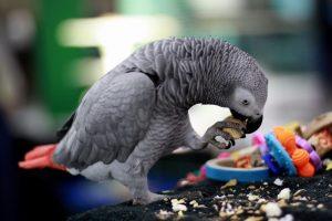 Картинки прикольные про попугаев   красивая подборка017