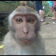 Картинки про смешных обезьян   красивая подборка018