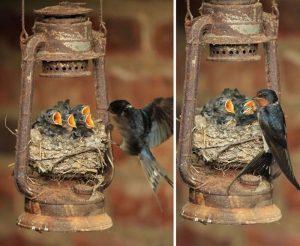 Картинки птица в гнезде   красивая подборка018