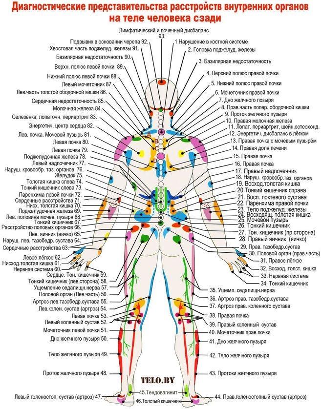 Картинки расположение органов человека (12)