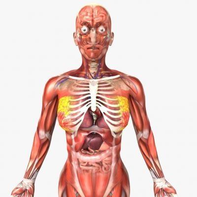 Картинки расположение органов человека (7)