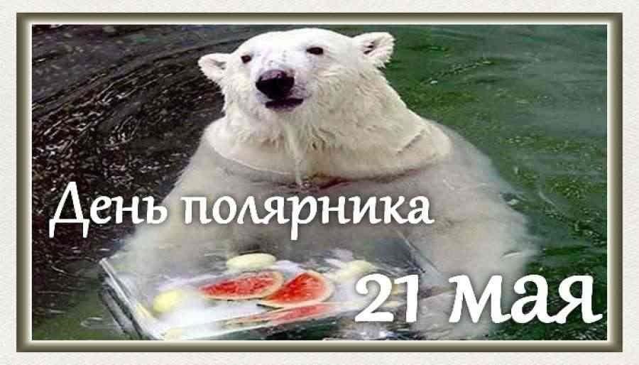 день полярника картинки поделится