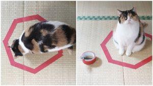 Картинки с рисованными котами   красивая подборка014