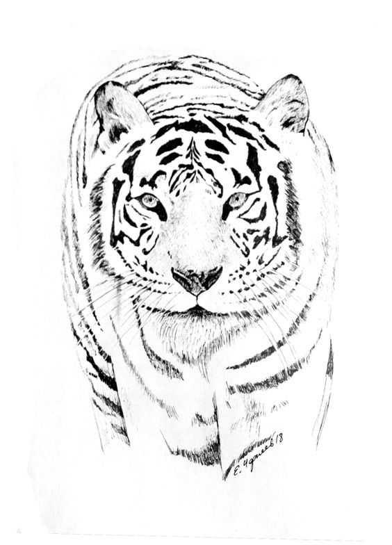 Картинки тигра скачать   красивая подборка009