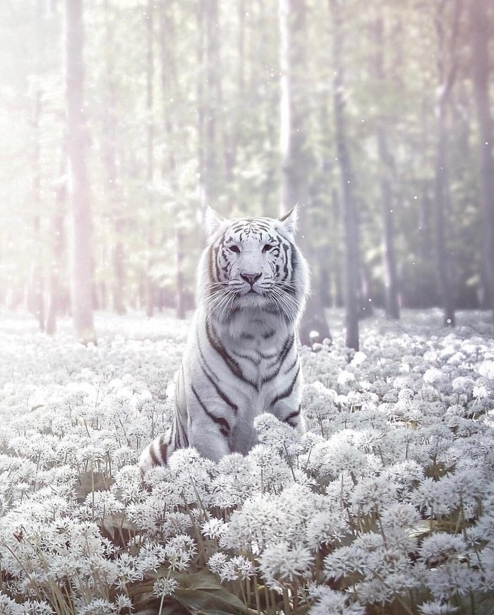 Картинки тигра скачать   красивая подборка011