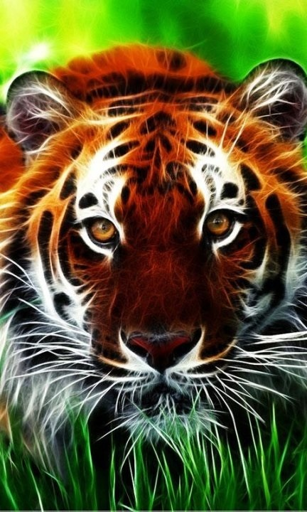 Картинки тигра скачать   красивая подборка013