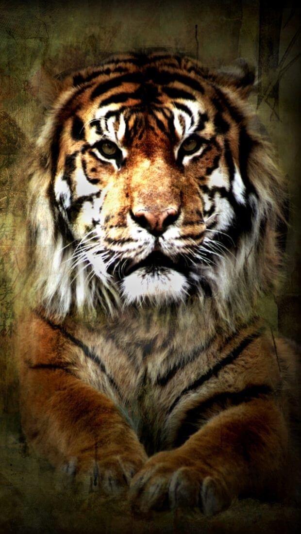 Картинки тигра скачать   красивая подборка017