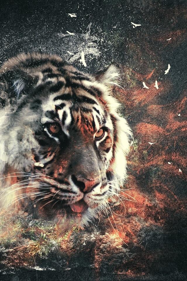 Картинки тигра скачать   красивая подборка020