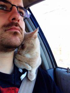Кошки в смешных ситуациях фото   подборка020