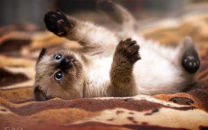 Кошки красивые картинки017