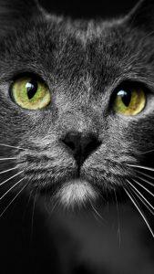 Красивые картинки на телефон кошки   милые019