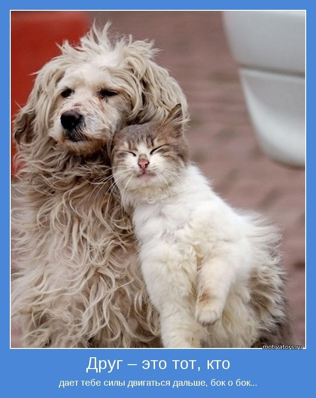 Картинки о неудачной дружбе