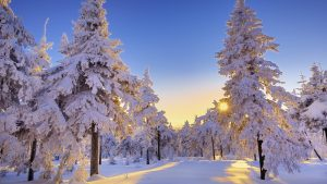 Красивые обои зима на рабочий стол019