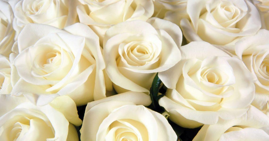 Красивые розы на рабочий стол картинки016