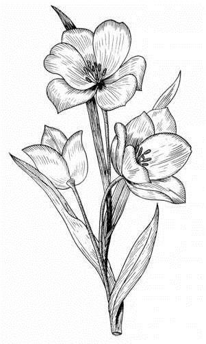 Красивые цветы на картинках   красивая подборка003