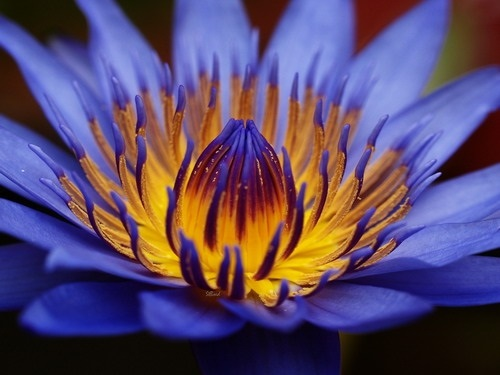 Красивые цветы на картинках   красивая подборка005