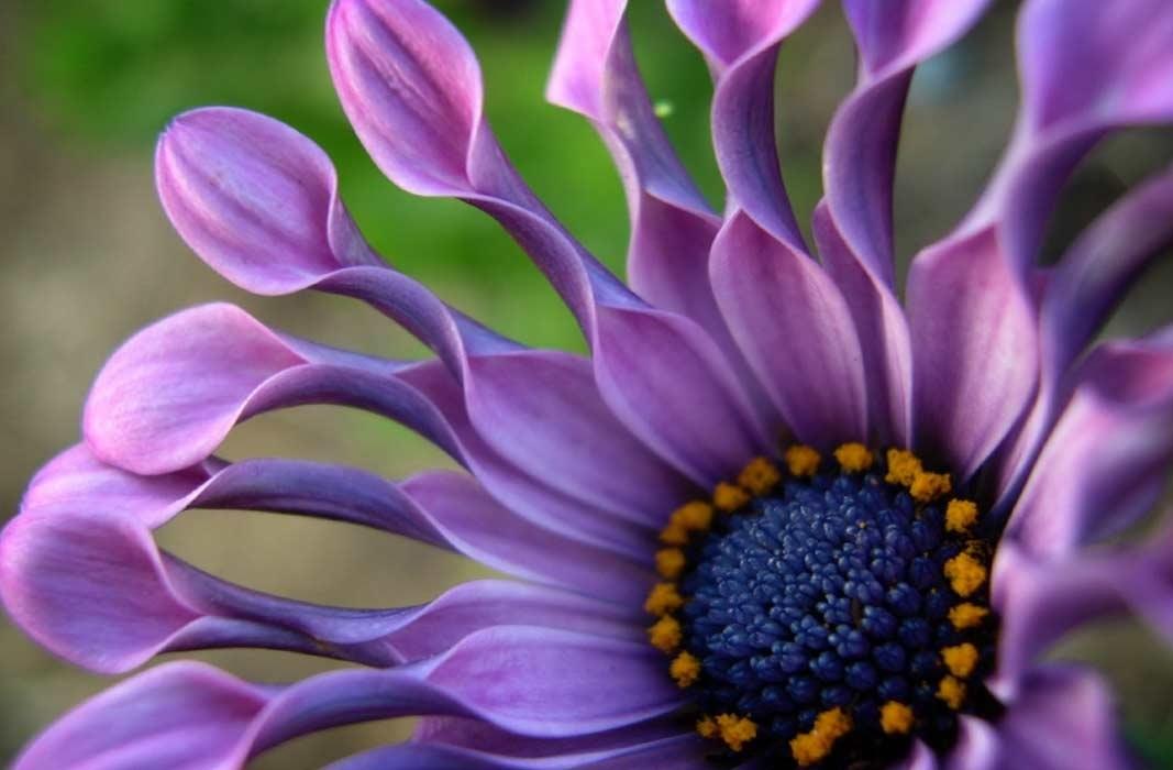 Красивые цветы на картинках   красивая подборка006