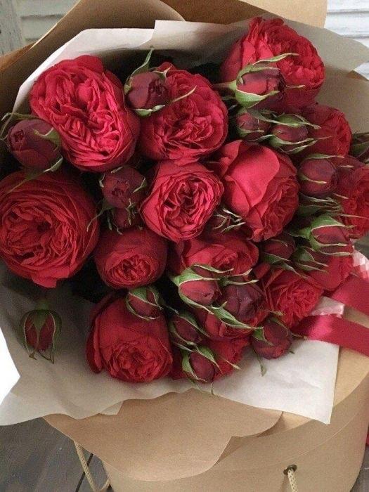 Красивые цветы на картинках   красивая подборка007