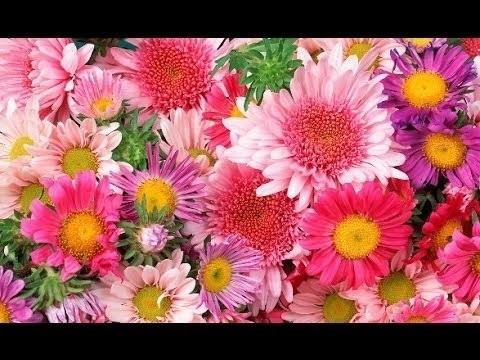 Красивые цветы на картинках   красивая подборка010