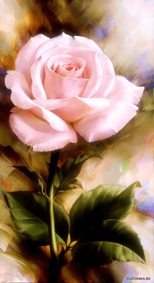 Красивые цветы на картинках   красивая подборка012