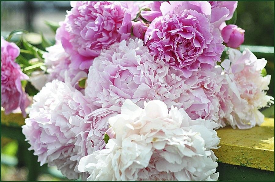Красивые цветы на картинках   красивая подборка014