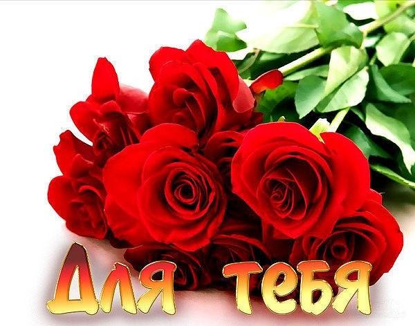 Красивые цветы на картинках   красивая подборка018