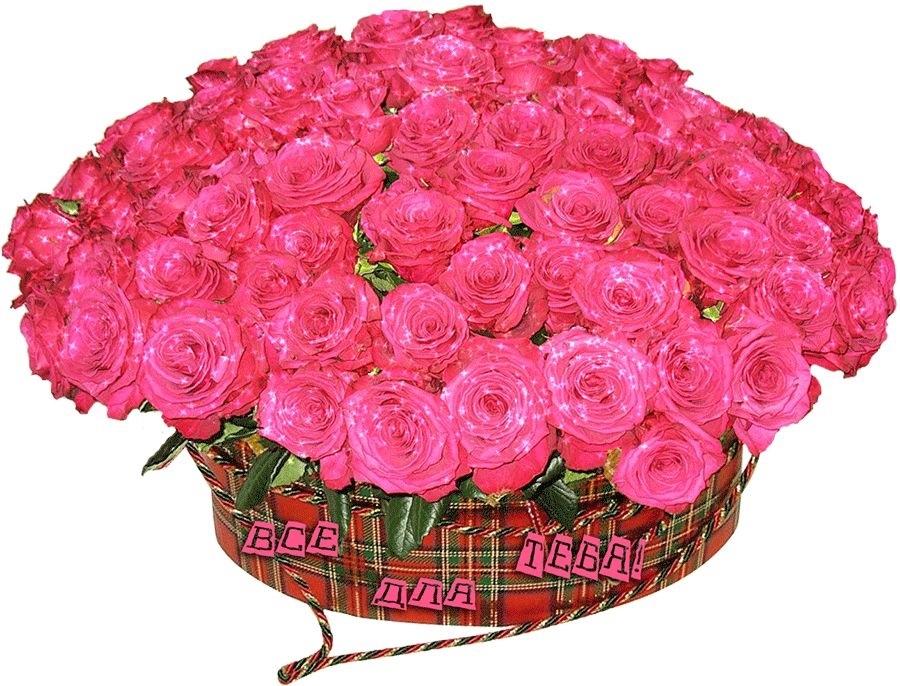 Красивые цветы на картинках   красивая подборка020