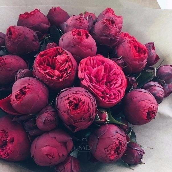 Красивые цветы на картинках   красивая подборка021