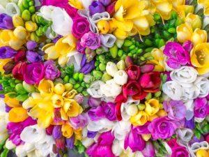 Красивые цветы на картинках   красивая подборка023