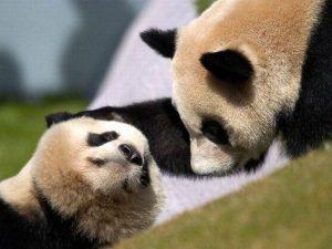 Милые и прикольные картинки животных   арты020