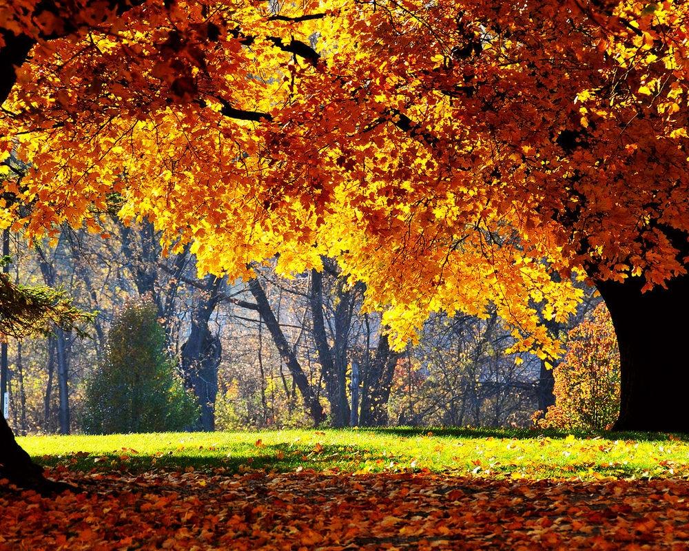 Обои для рабочего стола осень в парке006