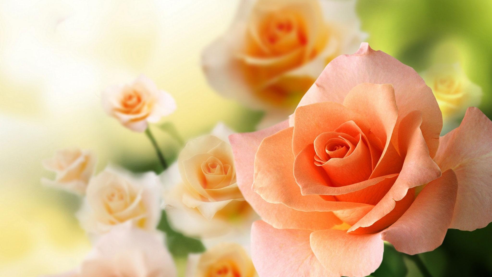Картинки красивые с розами цветами