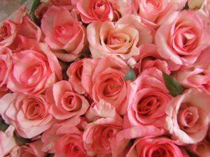 Обои для рабочего стола розы цветы015