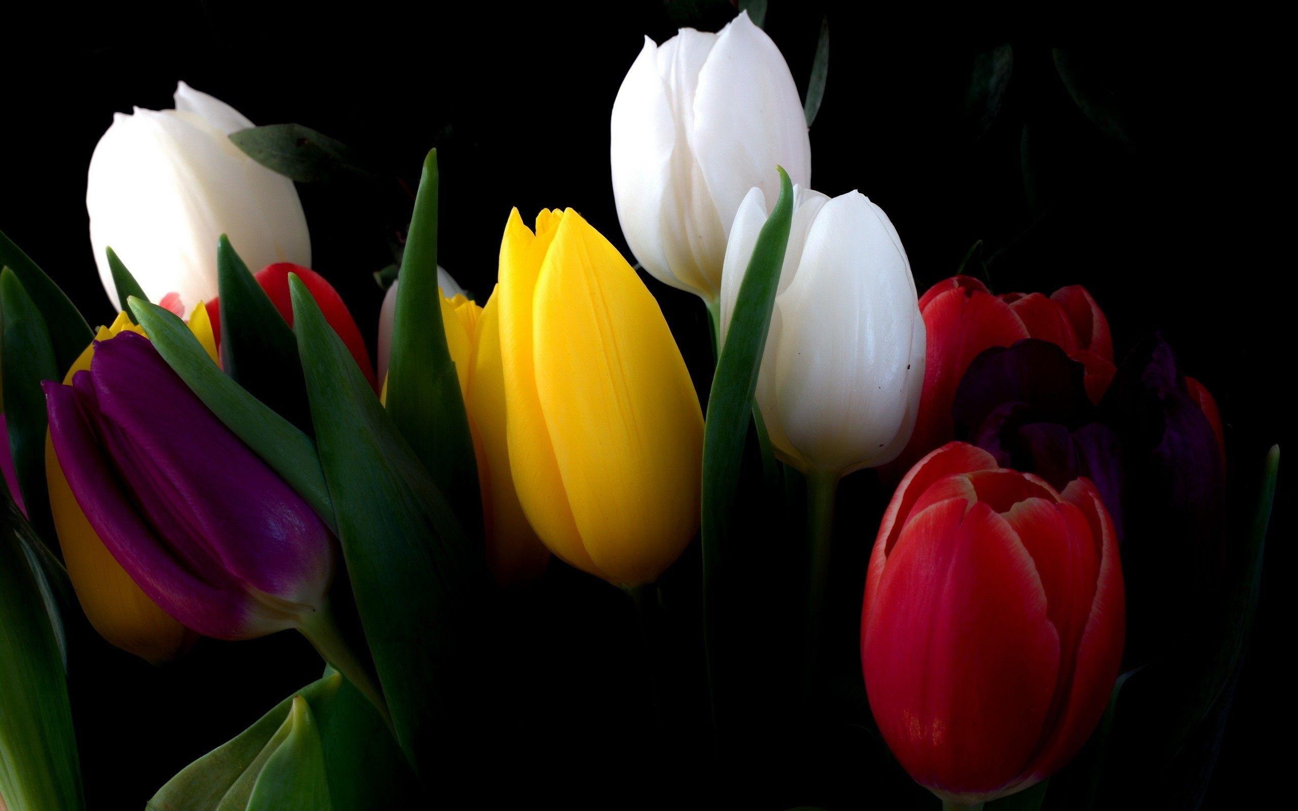 Обои на телефон цветы на черном фоне001