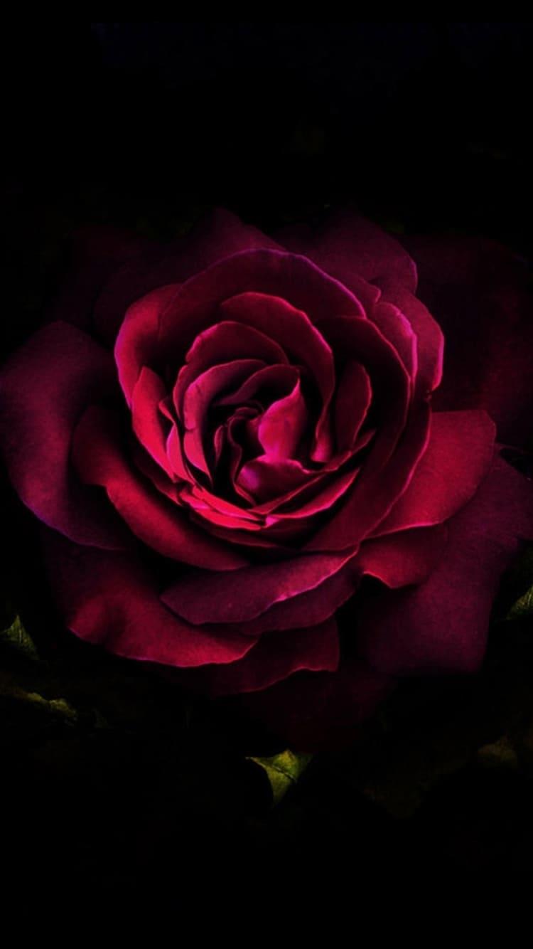 Обои на телефон цветы на черном фоне004