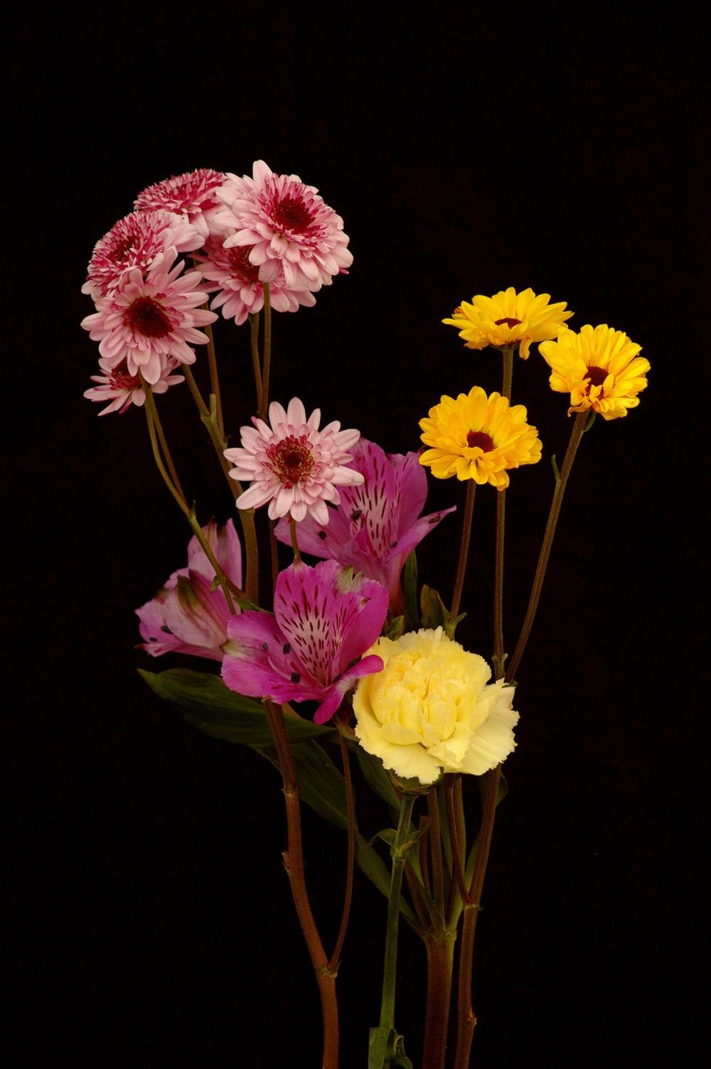 Обои на телефон цветы на черном фоне012