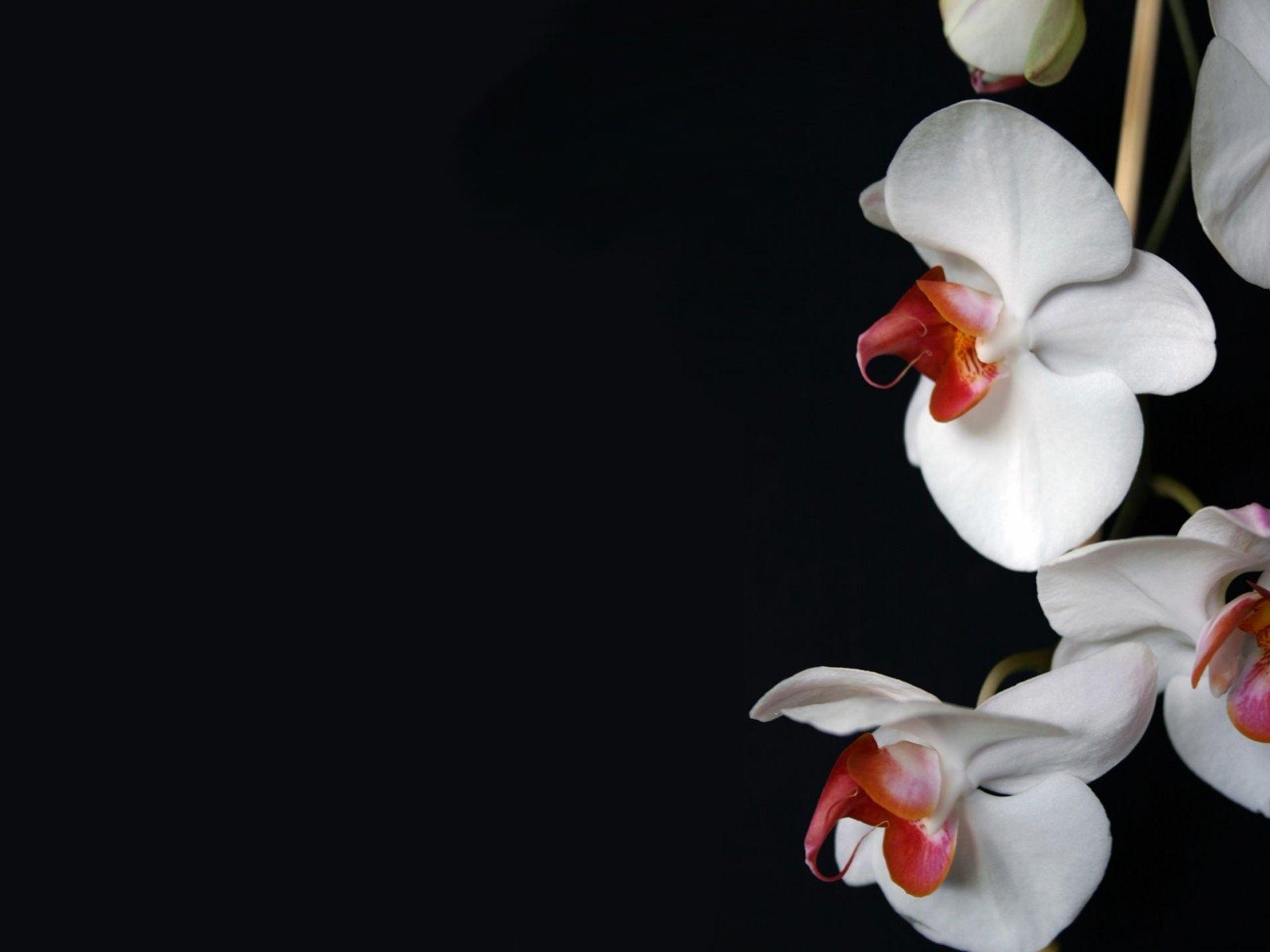 Обои на телефон цветы на черном фоне014