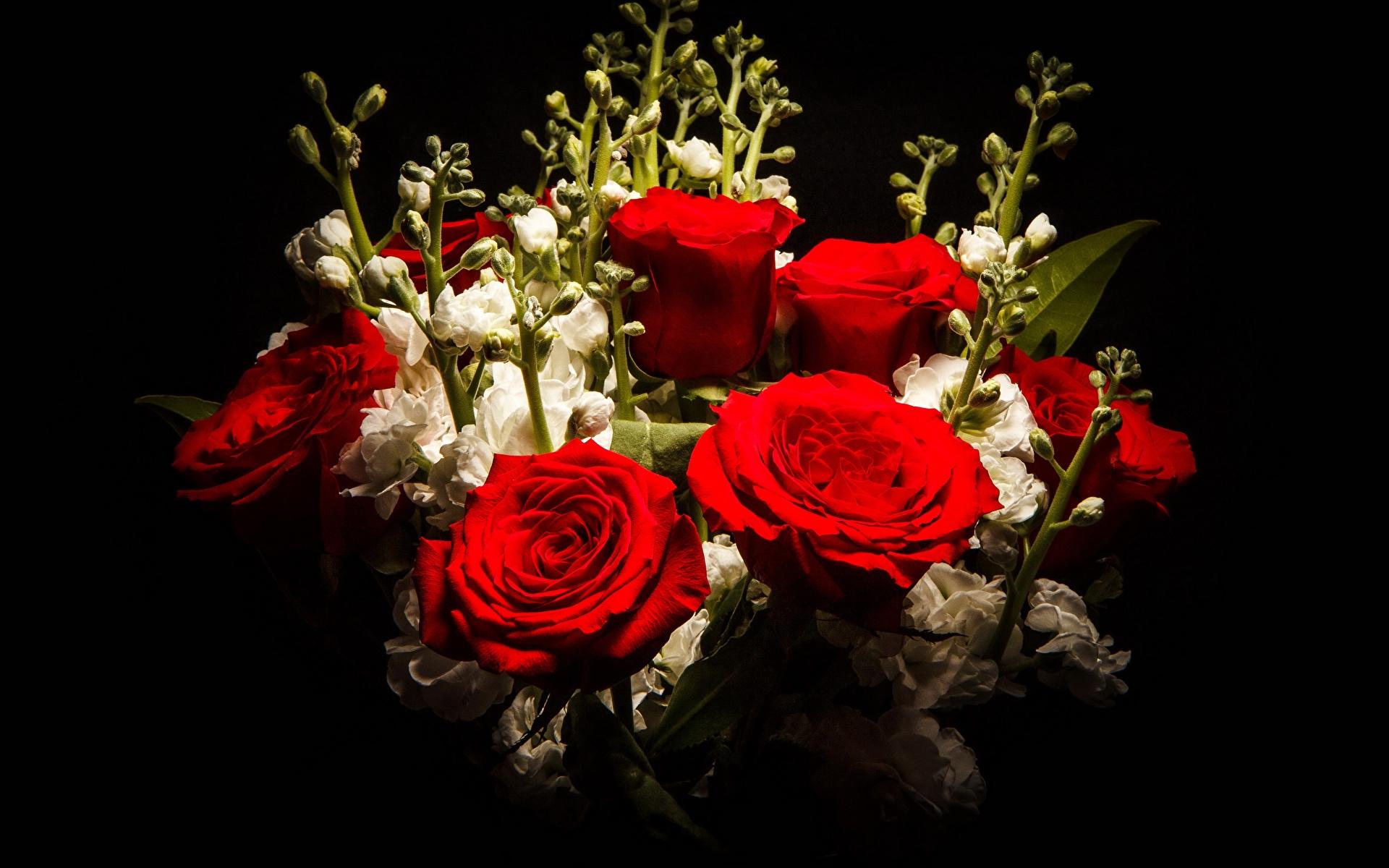 Обои на телефон цветы на черном фоне015