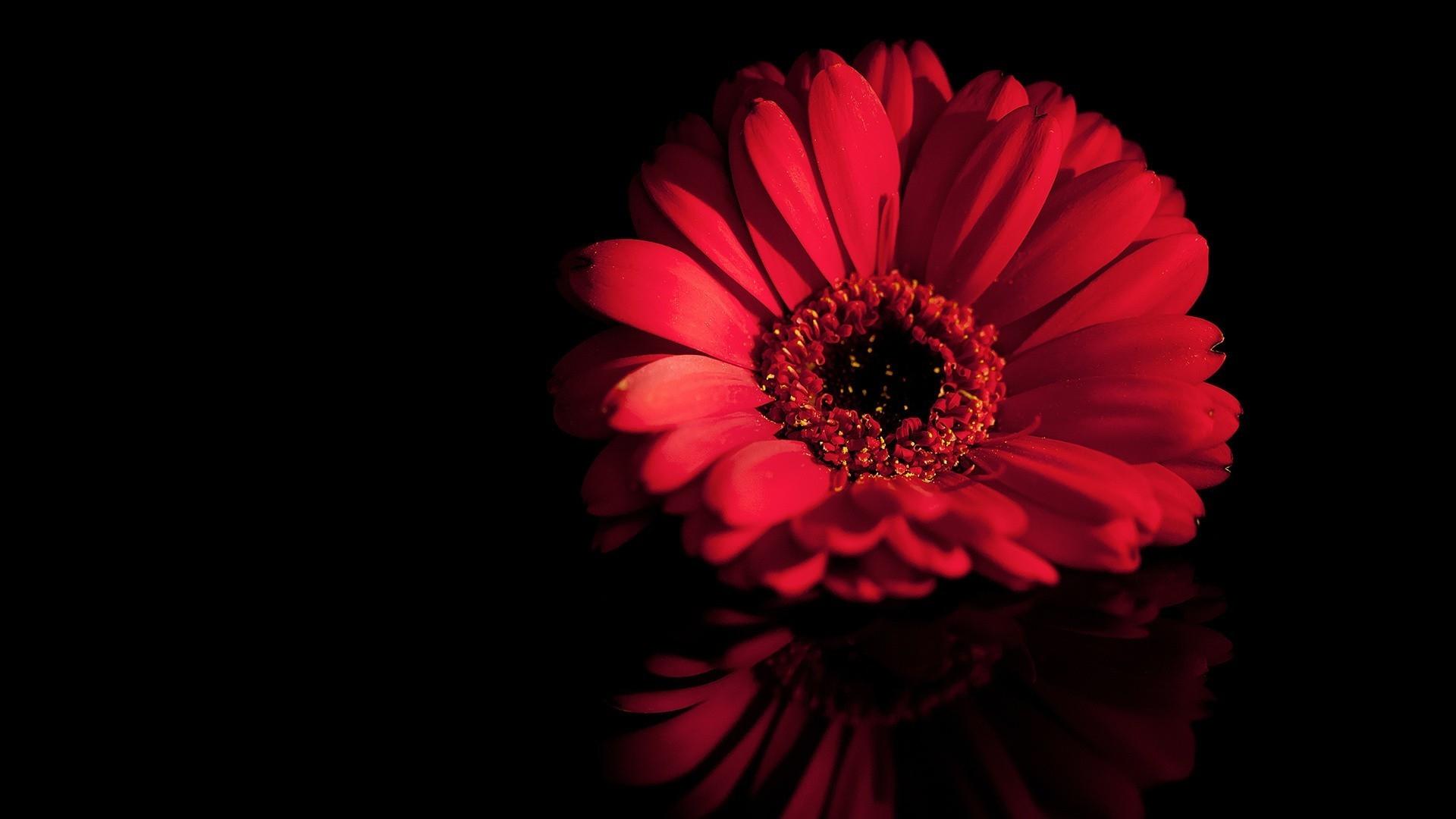 Обои на телефон цветы на черном фоне016