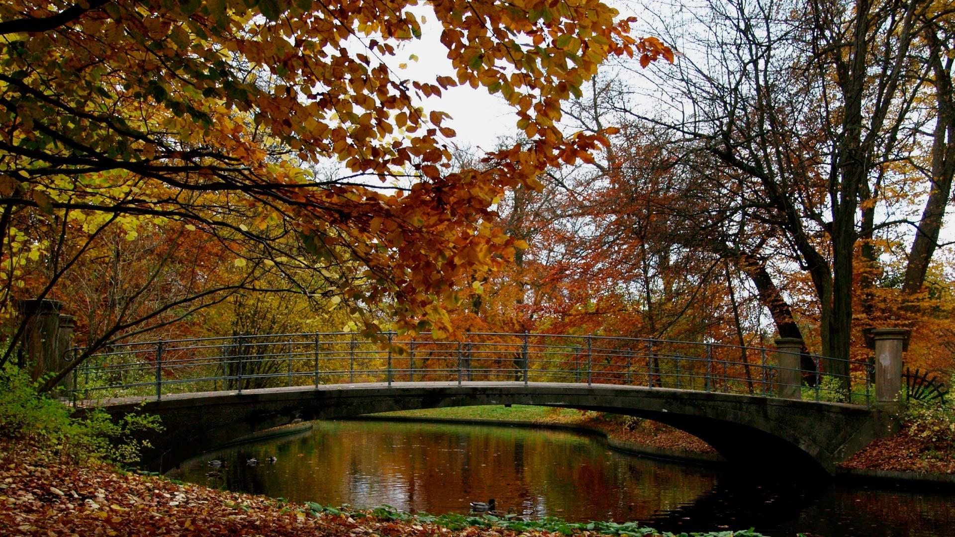 Обои осень в парке для рабочего стола012