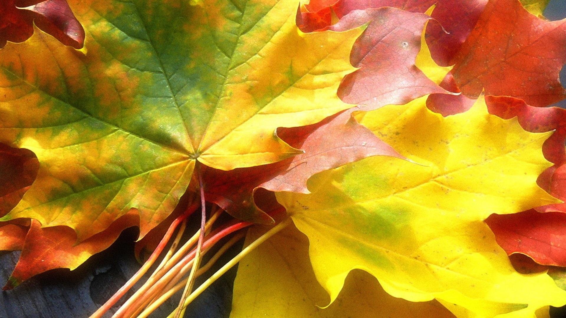 Осенние листья картинки на рабочий стол001