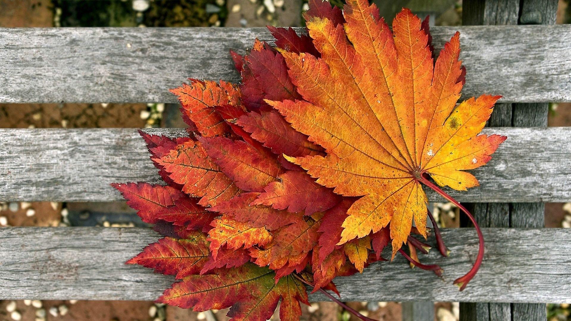 Осенние листья картинки на рабочий стол003