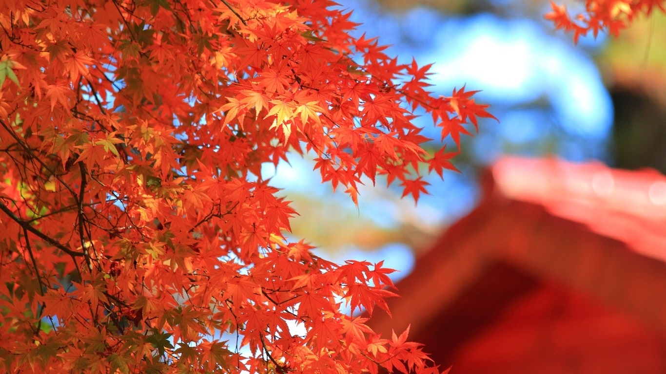 Осенние листья картинки на рабочий стол005
