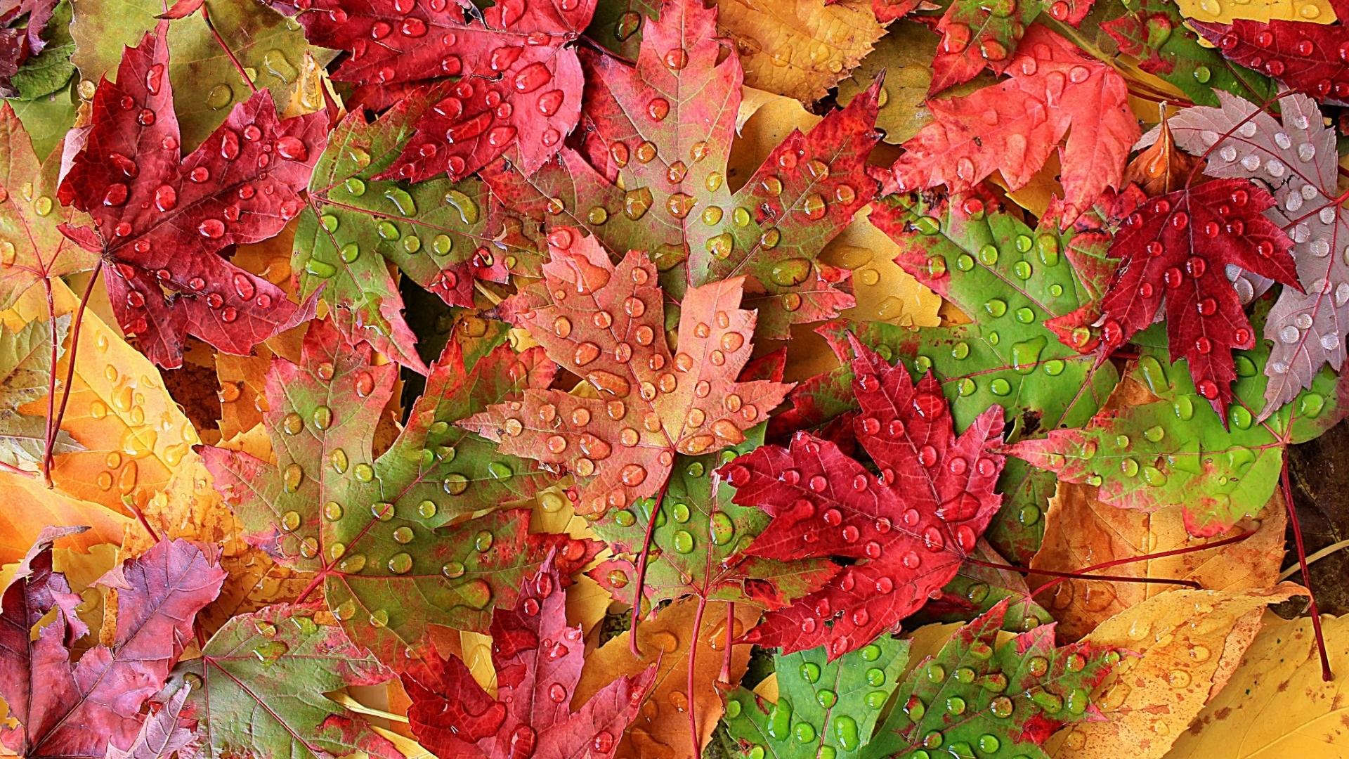 Осенние листья картинки на рабочий стол006