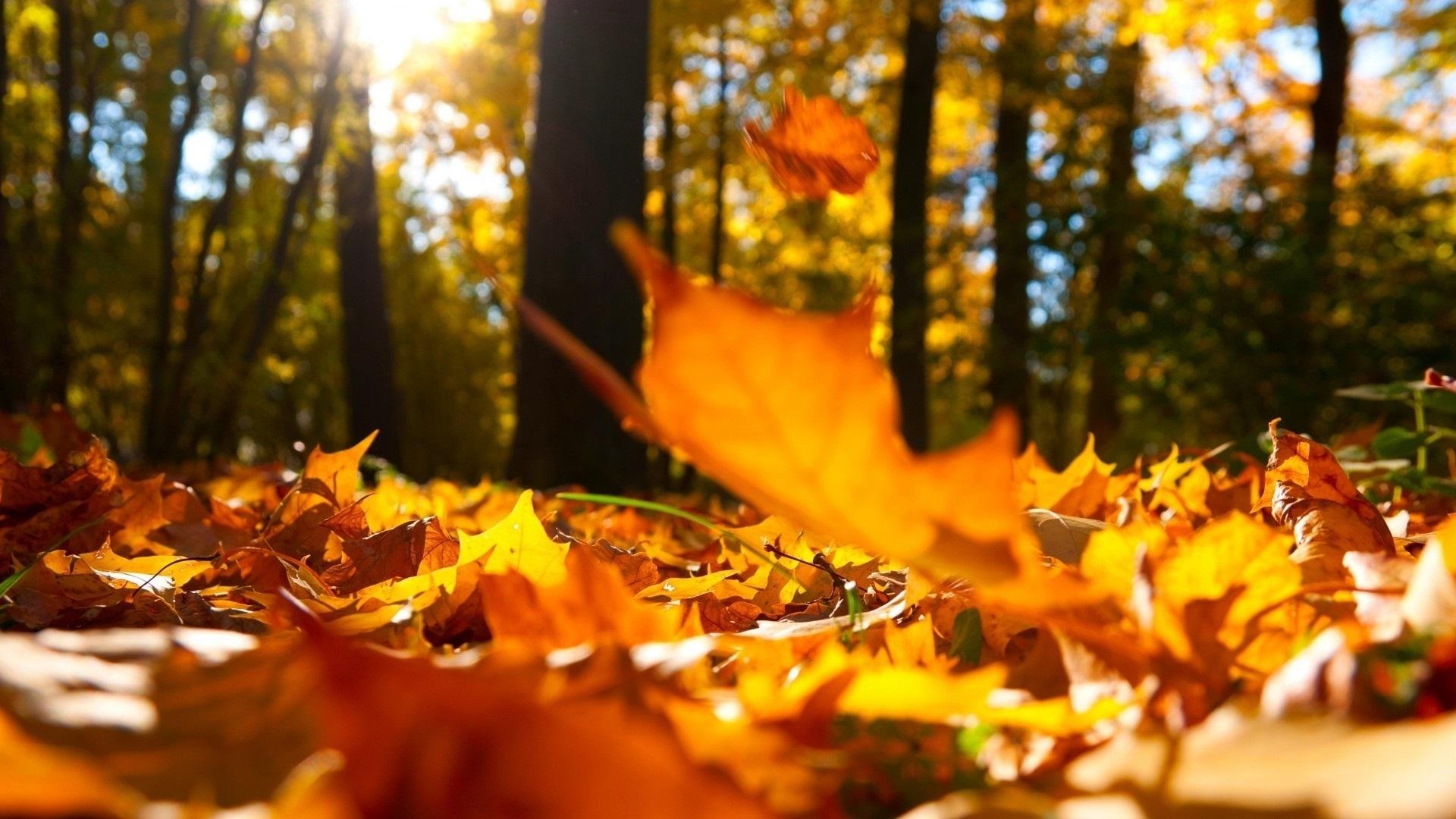 Осенние листья картинки на рабочий стол007